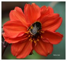 Sunday Bee by Deb-e-ann