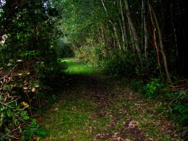 forest path by misscuteness