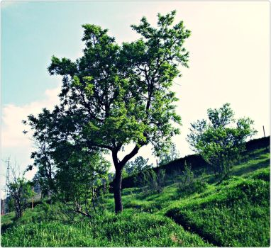 greens by ANDMAiYESi1986