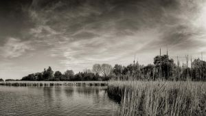 Lynde Shores Conservation Area - 4 by studpup