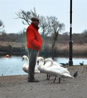 swanning around by awjay