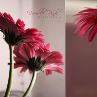 Double Pink by otherw0rld