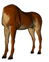 Textured Horse Body Test 1 by Some-Art