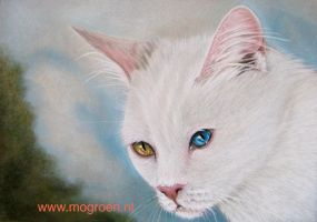 Odd Eyed cat drawing by mo62