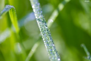 leaves of grass II by KrisSimon