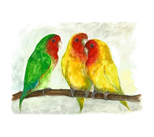 Agapornis - Love birds by LauraMSS