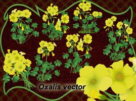 Oxalis vector by roula33