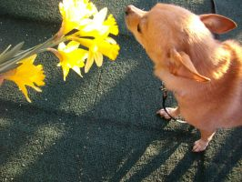 I does not accept flowers. by Ashleyley92