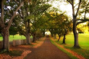 Church Path by CainPascoe