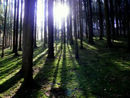 sunshine and shadows by Mittelfranke