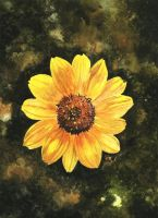 Sunflower by aakritiarts