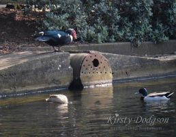 Different birds by Kirsty2010dodgs
