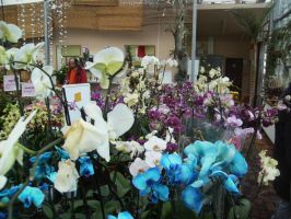 orchids again by Ad1er