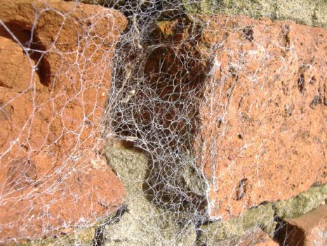 spider web - one by ral-stock