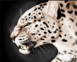 angry leopard by TheSiubhan