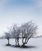 Winter for three by paradoxofminds