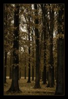 Sepia Woods by bamako