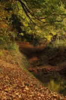 autumn forest brook landscape stock by Nexu4