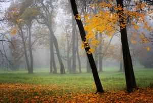 Autumn view... _19_ by my-shots