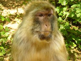 Monkey Two by khoral
