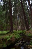 Forest by Attia08