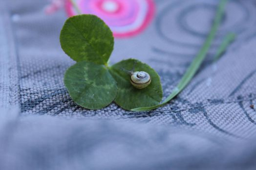 small baby snail, on 3 leaf clover ~ by chihirophotograper