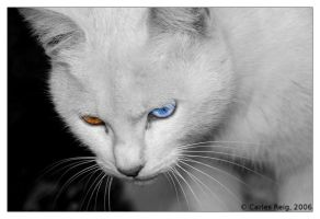 Kitty colours by CarlesReig