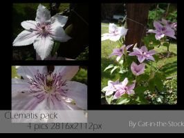 Clematis pack by Cat-in-the-Stock