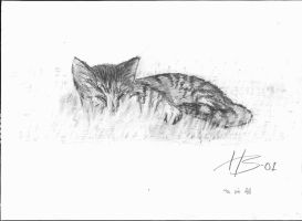 Our cat drawn freehand by henkrygg