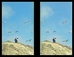 Stereo 3D Parallel Coast Seagulls by shawnrl61