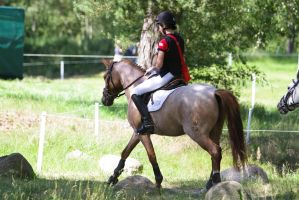 Chestnut Roan Pony outdoors riding by LuDa-Stock