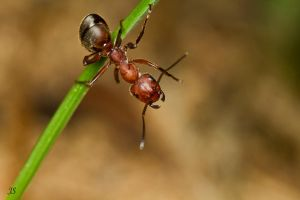 Ant by JS2010