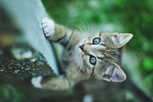 the cat climbs by Dileyla