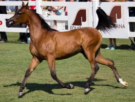 STOCK - Equitana 2013-76 by fillyrox