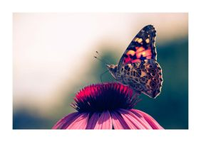 Butterfly in Purple and Red by ReneAigner