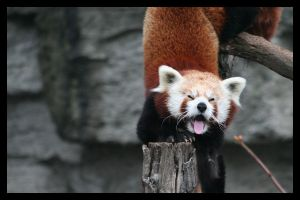 Stretching by AF--Photography