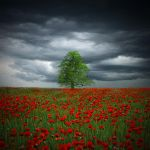 The Tree 1.9 by JessicaBader