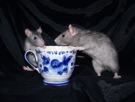 Rats and tea 03 by Villainess-Vi