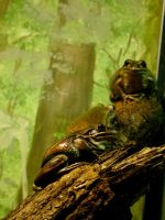 camo frogs by squirt610