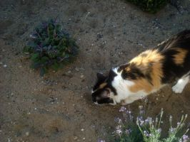 Stock Image - Calico 1 by Squirrel-Art