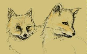 fox sketches by LadySadEyes