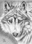 ACEO Tender Wolf by sschukina