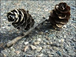 larch cones by truelove-knot