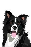 border collie by Maaira