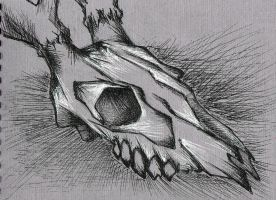 Skull by Benzzzin232