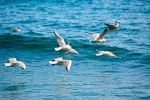 Flying Swarm Of Seagulls by georges-dahdouh