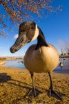 Goosed by the Goose by FramedByNature