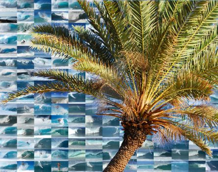 Palms Montage by SeanTiner
