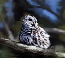 The Barred Owl by cromzl