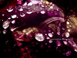 microcosmos of dew by siby